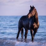 Zauberhafte Pferde-Fotos am Strand